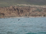 Dolphin Tail North of Avila